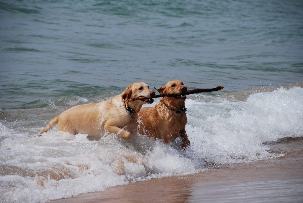 Teamwork - Dogs