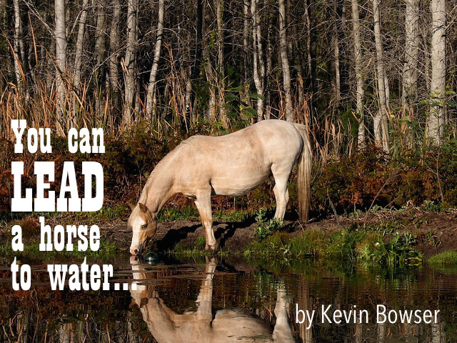 You can lead a horse