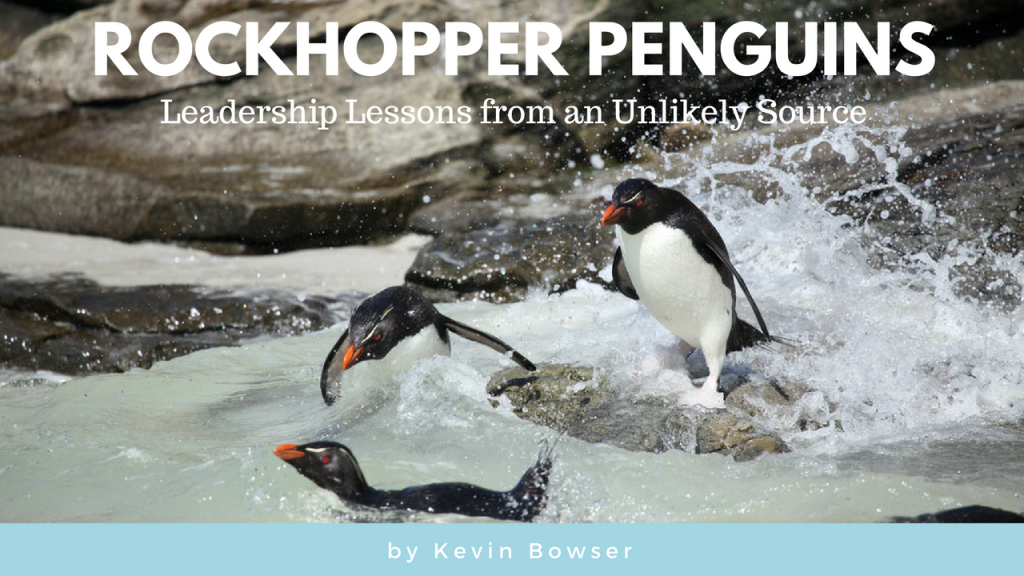 rockhopper-penguins