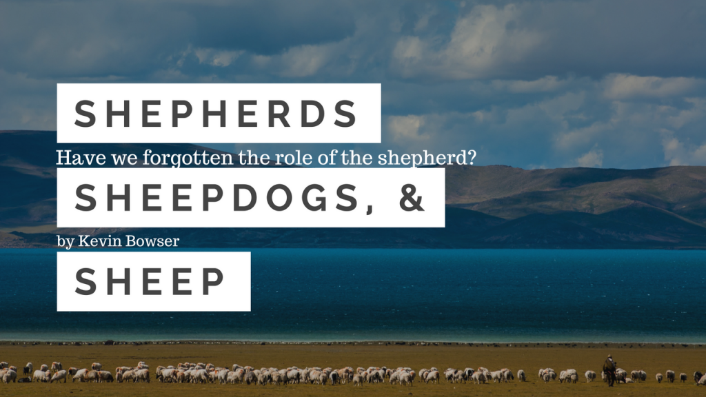 shepherds-sheepdogs-and-sheep-3